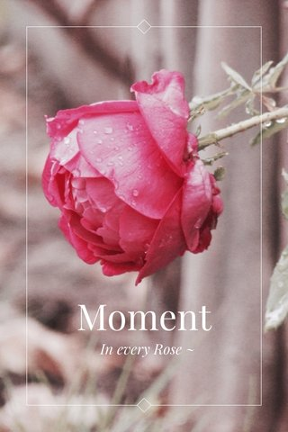 Moment In every Rose ~