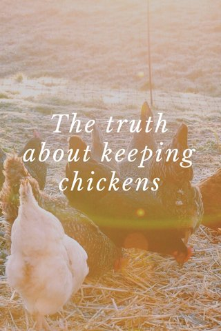 The truth about keeping chickens