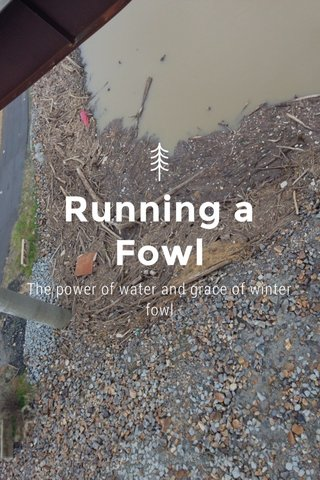 Running a Fowl The power of water and grace of winter fowl