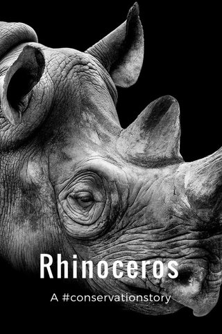 Rhinoceros A #conservationstory