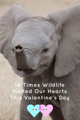 14 Times Wildlife Melted Our Hearts This Valentine's Day