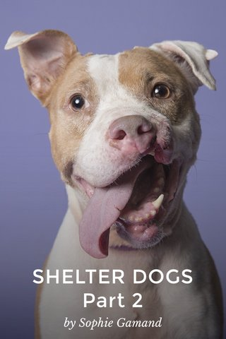 SHELTER DOGS Part 2 by Sophie Gamand