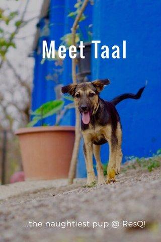 Meet Taal ...the naughtiest pup @ ResQ!
