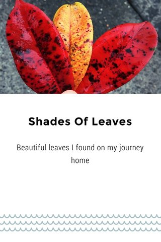 Shades Of Leaves