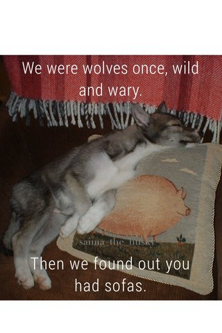 We were wolves once, wild and wary. Then we found out you had sofas.