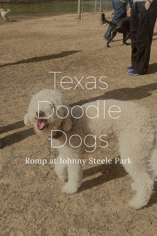 Texas Doodle Dogs Romp at Johnny Steele Park