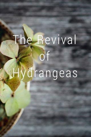 The Revival of Hydrangeas