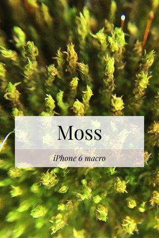 Moss iPhone 6 macro
