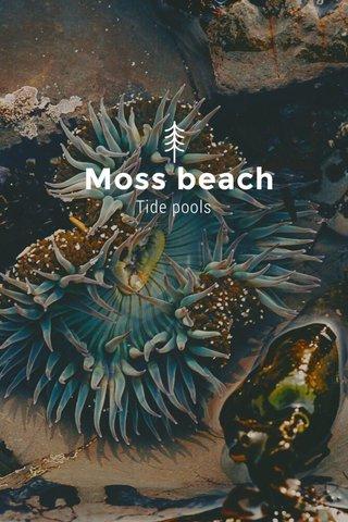 Moss beach Tide pools