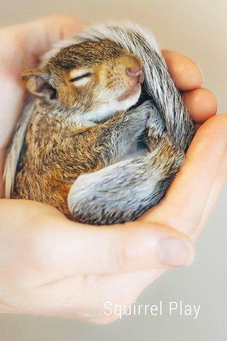 Squirrel Play Squirrel Play
