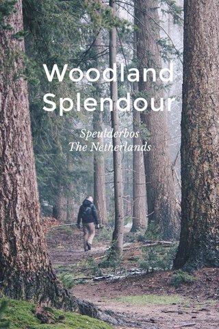 Woodland Splendour Speulderbos The Netherlands