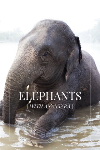 ELEPHANTS | WITH ANANTARA |