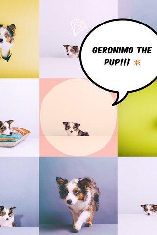 Geronimo the pup!!! 💥
