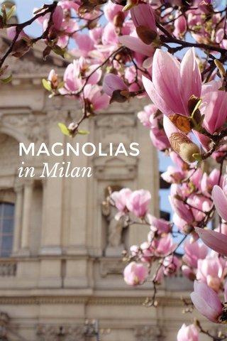 MAGNOLIAS in Milan
