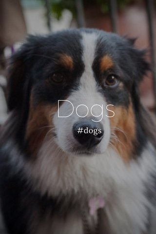 Dogs #dogs