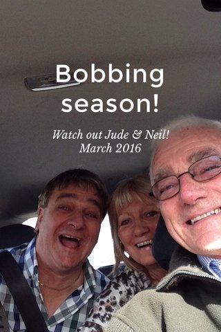 Bobbing season! Watch out Jude & Neil! March 2016