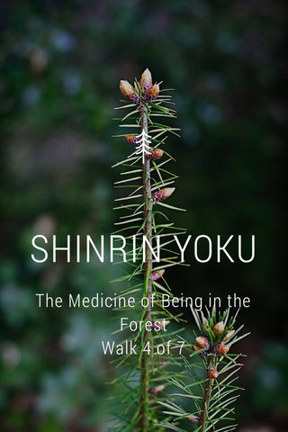 SHINRIN YOKU The Medicine of Being in the Forest Walk 4 of 7
