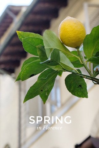 SPRING in Florence