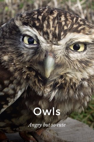 Owls Angry but so cute