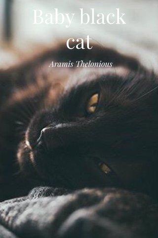 Baby black cat Aramis Thelonious