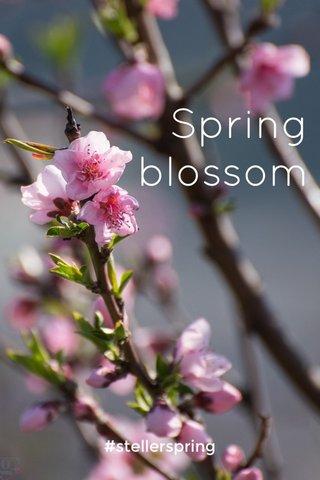 Spring blossom #stellerspring