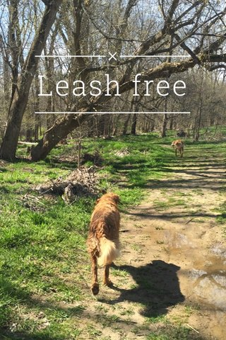 Leash free