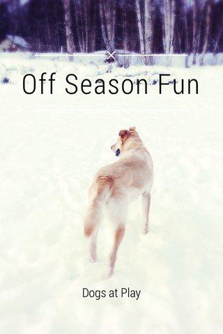 Off Season Fun Dogs at Play