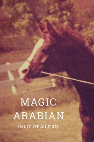 MAGIC ARABIAN never let love die
