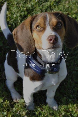 Dear, Daisy #beagle #puppy