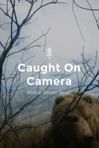 Caught On Camera Motion Sensor Series