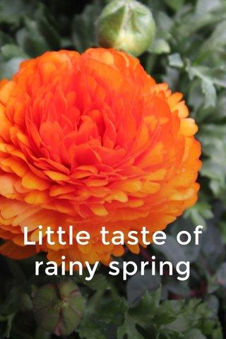 Little taste of rainy spring