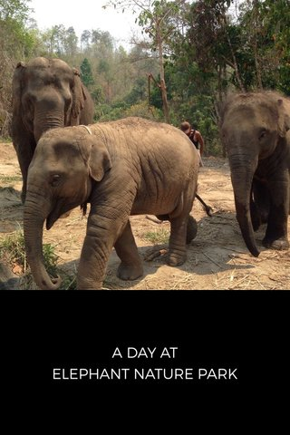 A DAY AT ELEPHANT NATURE PARK