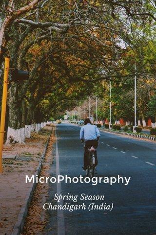 MicroPhotography Spring Season Chandigarh (India)