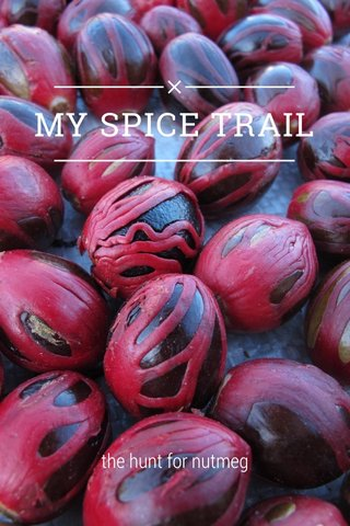 MY SPICE TRAIL the hunt for nutmeg