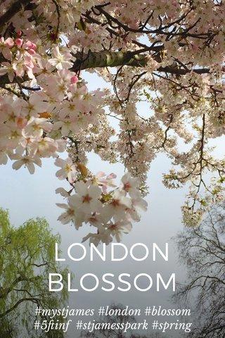 LONDON BLOSSOM #mystjames #london #blossom #5ftinf #stjamesspark #spring