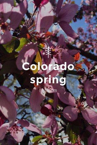 Colorado spring In bloom