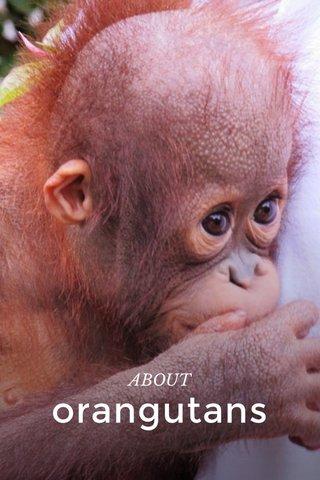 orangutans ABOUT