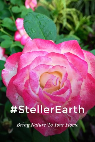 #StellerEarth Bring Nature To Your Home