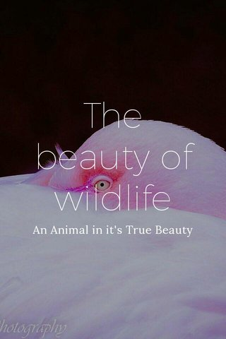 The beauty of wildlife An Animal in it's True Beauty