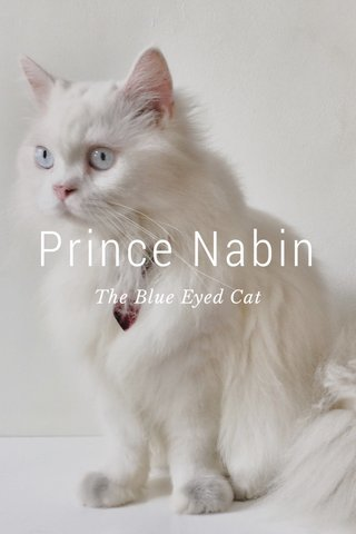 Prince Nabin The Blue Eyed Cat
