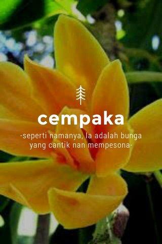 cempaka -seperti namanya, Ia adalah bunga yang cantik nan mempesona-