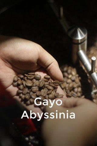 Gayo Abyssinia