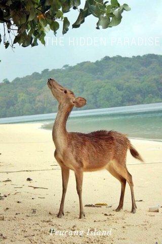 THE HIDDEN PARADISE Peucang Island
