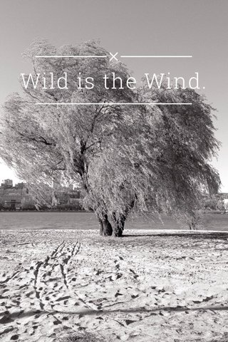 Wild is the Wind.