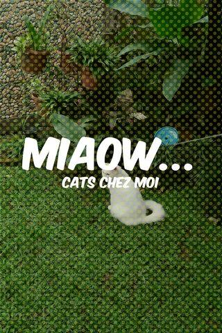 miaow... cats chez moi