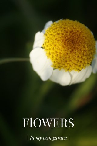 FlOWERS | In my own garden |