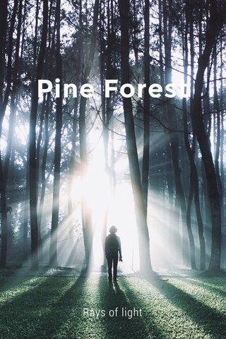 Pine Forest Rays of light