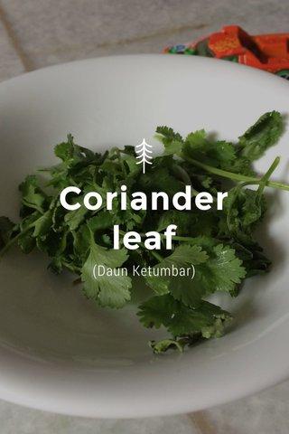 Coriander leaf (Daun Ketumbar)