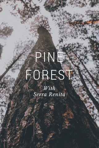 PINE FOREST With Serra Renita