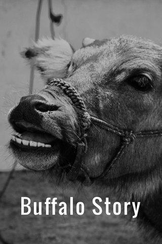 Buffalo Story